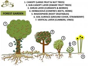 forest-garden1
